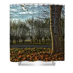 Pollard Willows In Rotterdam Shower Curtain