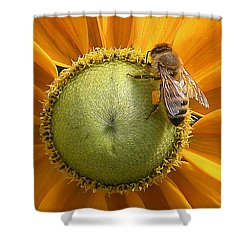 Pollen Time Shower Curtain by Brian Chase