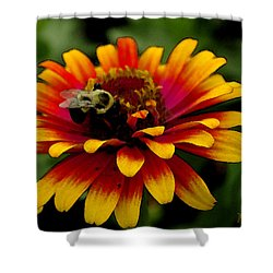 Shower Curtain featuring the photograph Pollenating Bumblebee by James C Thomas