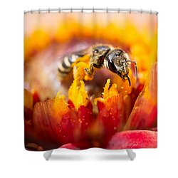 Shower Curtain featuring the photograph Pollination by Priya Ghose