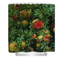 Pomegranates    Majorca Shower Curtain by John Singer Sargent