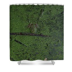 Shower Curtain featuring the photograph Pond Eyes by Robert Nickologianis