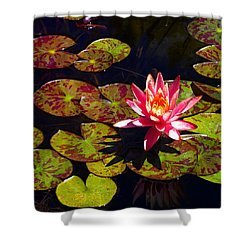 Pond Lily Shower Curtain by Nick Kloepping