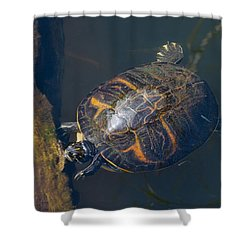 Pond Slider Turtle Shower Curtain by Rudy Umans