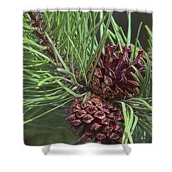 Ponderosa Pine Cones Shower Curtain by Sharon Talson