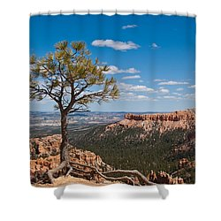 Shower Curtain featuring the photograph Ponderosa Pine Tree Clinging To Life On Canyon Rim by Jeff Goulden