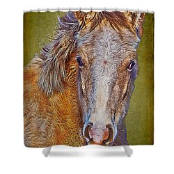 Pony Portrait  Shower Curtain