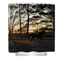 Pony's Evening Pasture Trot Shower Curtain by Paulette B Wright