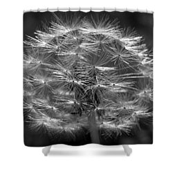 Shower Curtain featuring the photograph Poof - Black And White by Joseph Skompski