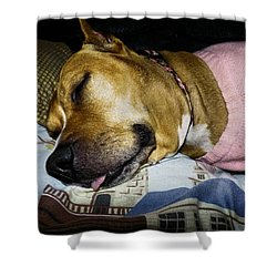 Pooped Pup Shower Curtain by Robyn King