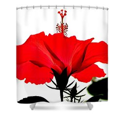 Pop Of Red Shower Curtain by Ramona Johnston