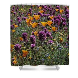 Poppies And Owl Clover Shower Curtain by Susan Rovira