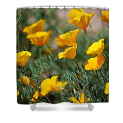 Shower Curtain featuring the photograph Poppies by Tam Ryan