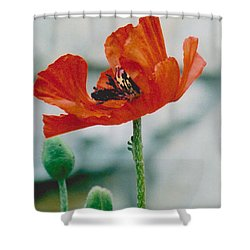 Poppy - 1 Shower Curtain
