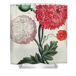 Poppy Shower Curtain by Basilius Besler
