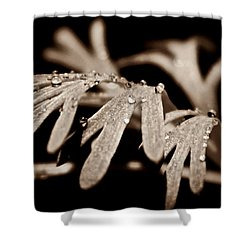 Poppy Foliage Shower Curtain by Chris Berry