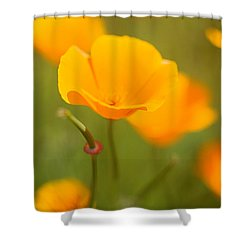 Shower Curtain featuring the photograph Poppy II by Ronda Kimbrow