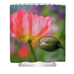 Poppy In Waiting Shower Curtain by Rona Black
