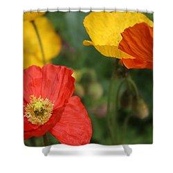 Poppy Iv Shower Curtain