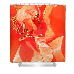 Shower Curtain featuring the photograph Poppy Palette In Red by Brian Boyle