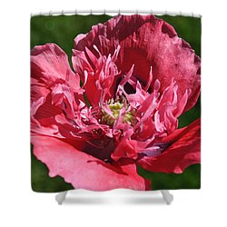 Poppy Pink Shower Curtain by Jim Hogg