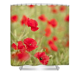 Poppy Red Shower Curtain by Anne Gilbert