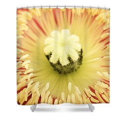 Poppy Sunburst  Shower Curtain by Priya Ghose