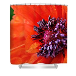 Poppy's Purple Passion Shower Curtain by Bill Pevlor