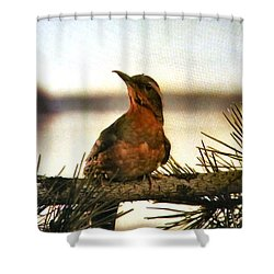 Population 51201 Shower Curtain