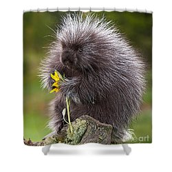 Porcupine With Arrowleaf Balsamroot Shower Curtain by Jerry Fornarotto