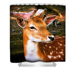 Portrait Male Fallow Deer Shower Curtain
