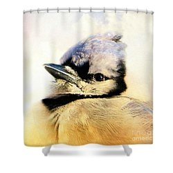 Portrait Of A Blue Jay Shower Curtain