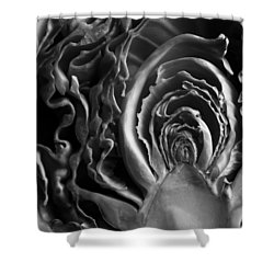 Portrait Of A Cabbage II Shower Curtain by Caitlyn  Grasso
