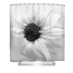 Portrait Of A Daisy Shower Curtain by Louise Kumpf