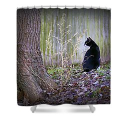 Portrait Of A Feline Shower Curtain by Brian Wallace