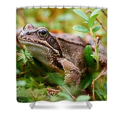 Portrait Of A Frog Shower Curtain by Jouko Lehto