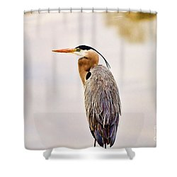 Portrait Of A Great Blue Heron Shower Curtain by Scott Pellegrin
