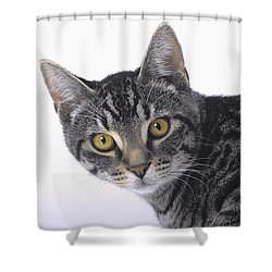 Portrait Of A Grey Tabby Catvancouver Shower Curtain by Thomas Kitchin & Victoria Hurst