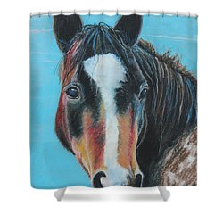 Portrait Of A Wild Horse Shower Curtain