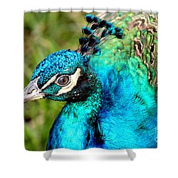Shower Curtain featuring the photograph Portrait Of A Peacock by Kathy  White