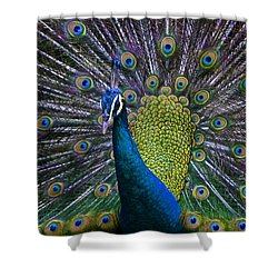 Portrait Of A Peacock Shower Curtain by Venetia Featherstone-Witty