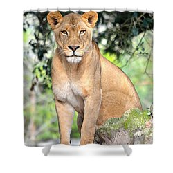 Portrait Of A Proud Lioness Shower Curtain by Richard Bryce and Family