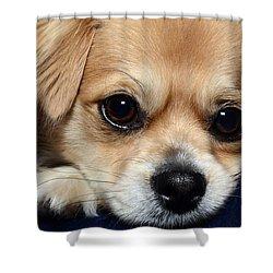 Portrait Of A Pup Shower Curtain by Lisa Knechtel