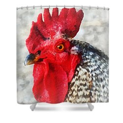 Portrait Of A Rooster Shower Curtain by Susan Savad