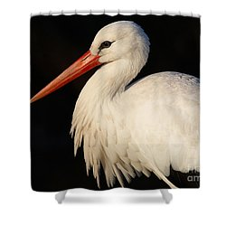 Portrait Of A Stork With A Dark Background Shower Curtain
