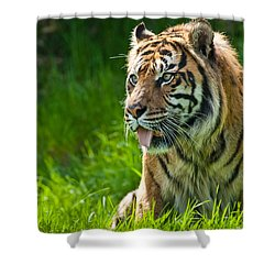 Shower Curtain featuring the photograph Portrait Of A Sumatran Tiger by Jeff Goulden