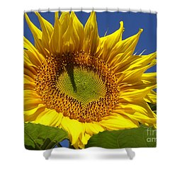 Portrait Of A Sunflower Shower Curtain