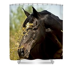 Portrait Of A Thoroughbred Shower Curtain