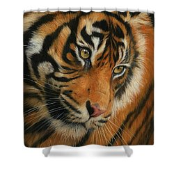 Portrait Of A Tiger Shower Curtain by David Stribbling