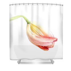 Portrait Of A Tulip In Yellow And Pink Shower Curtain by Louise Kumpf